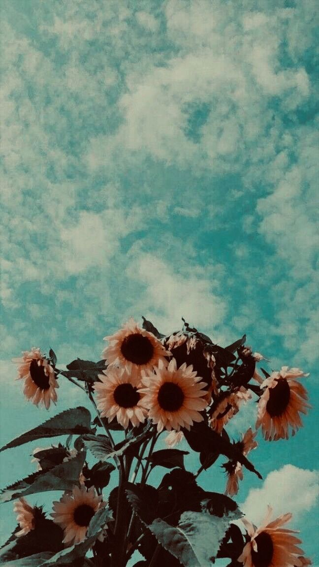 Aesthetic Vintage Wallpaper Best Wallpapers For Iphone Xr Home Screen And Lock Screen