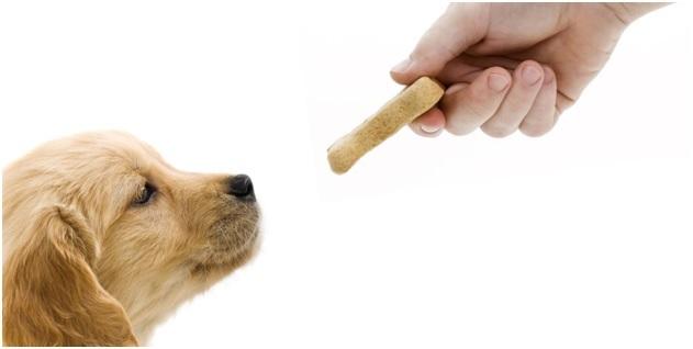 CBD Oil Treats for Dogs